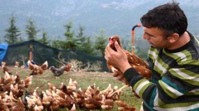 Tavuk Çiftliği Kredisi Nasıl Alınır? (Güncel)