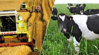 Tarım ve Hayvancılık 2020 Hibe Destekleri