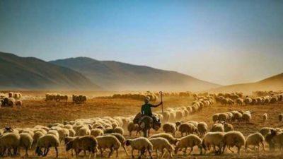 2020 Tarım ve Hayvancılık Destekleme Ödemeleri