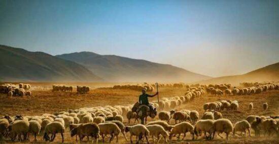 Tarım ve Hayvancılık Destekleme Ödemeleri