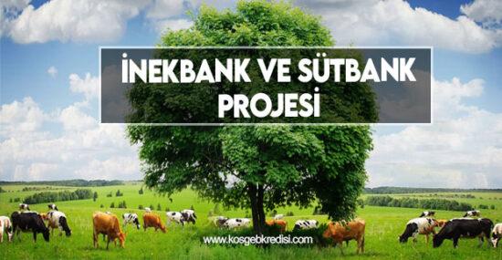 İnekbank ve Sütbank Projesi